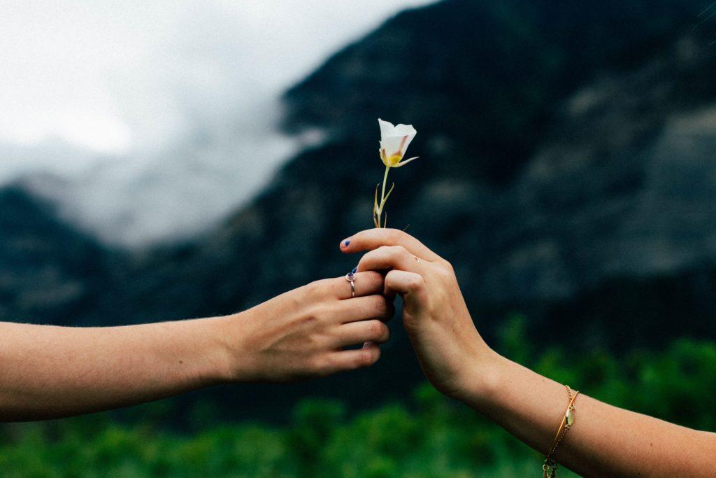 Kwiat darowizna