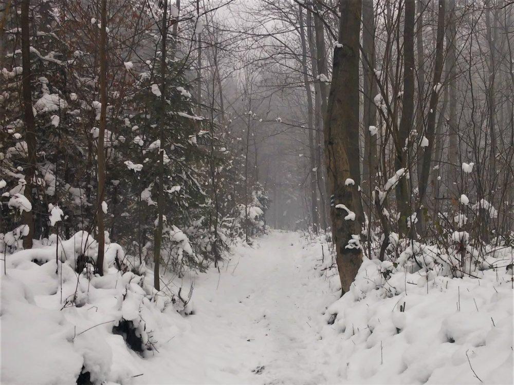 Zima droga w lesie wykroczenia