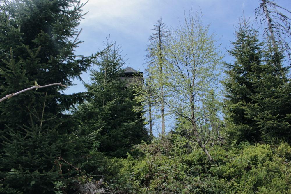 Gorc - wieża widokowa