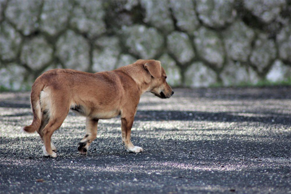 zadośćuczynienie za śmierć psa