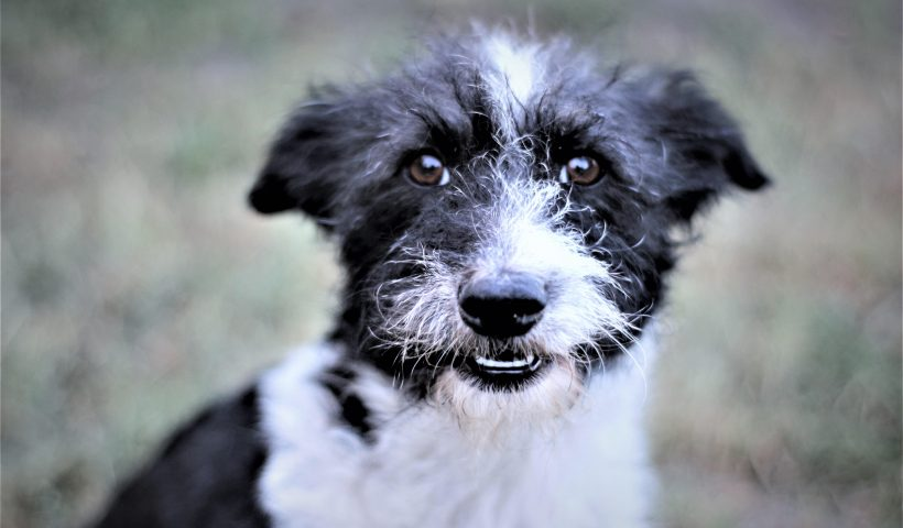 zakaz wprowadzania psów do parków miejskich